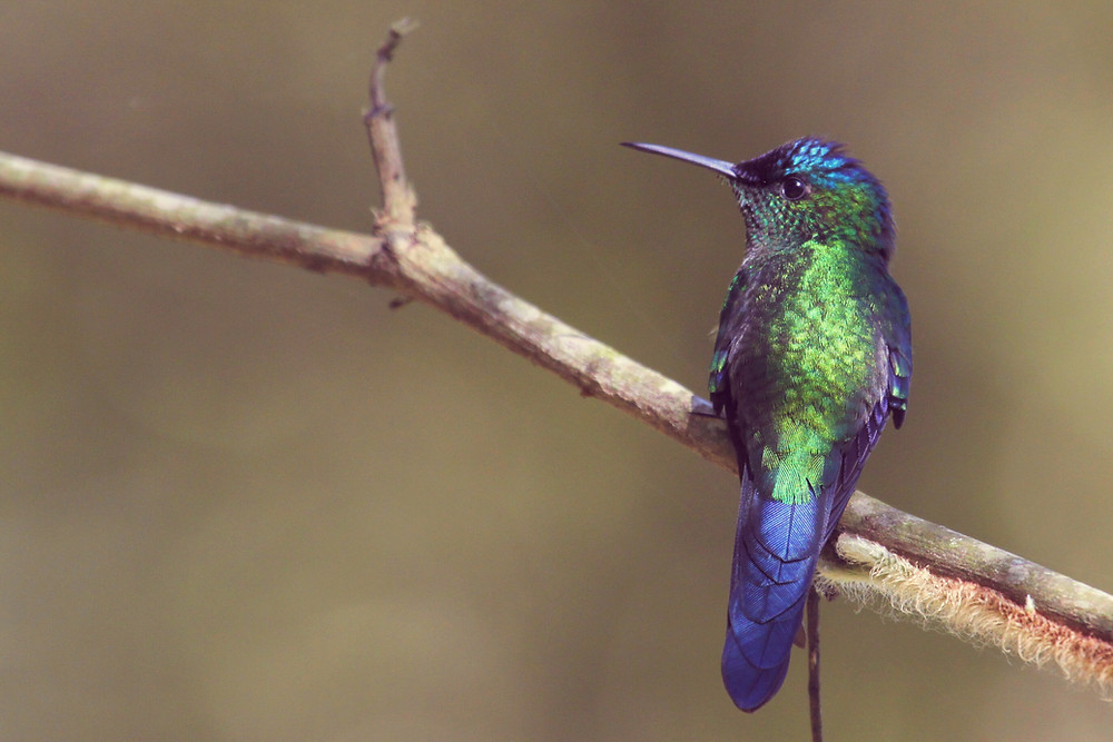 Blue & green colored bird sitting on a branch