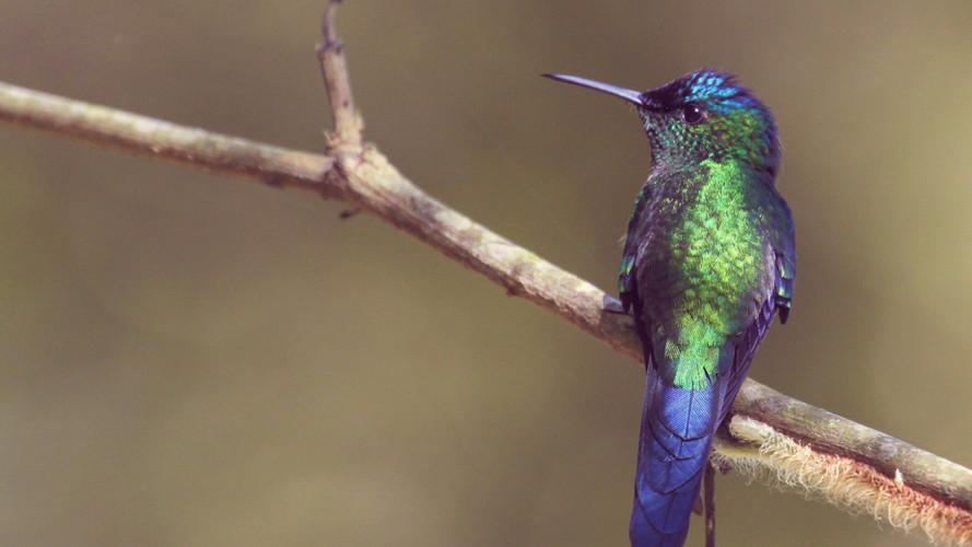 colibrì natural green san giovanni gemini