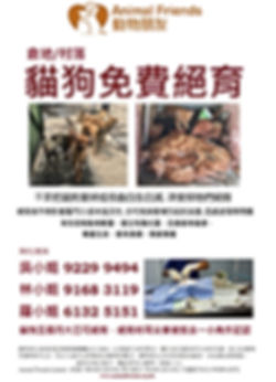 動物朋友免費絕育傳單 Animal Friends Free Desexing Flyer