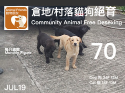動物朋友倉地村落貓狗絕育 0719