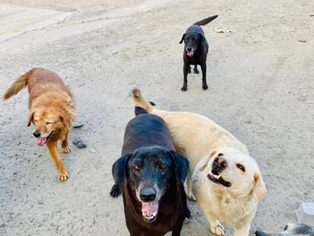 動物朋友成立10週年