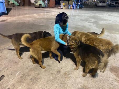 被狗狗圍著是幸福
