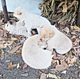動物朋友倉地_村落貓狗免費絕育.jpg