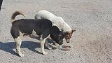 動物朋友 Animal Friends