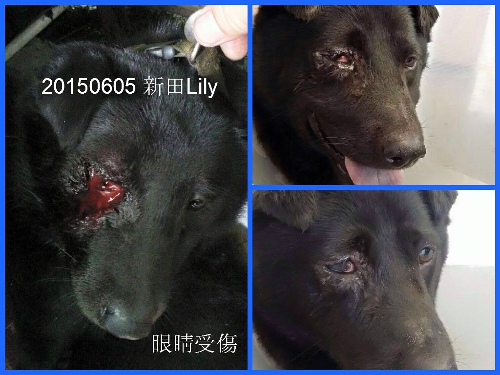 eye-injury-新田Lily-1024x768