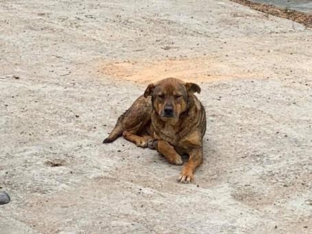 幾年前絕了育的狗狗