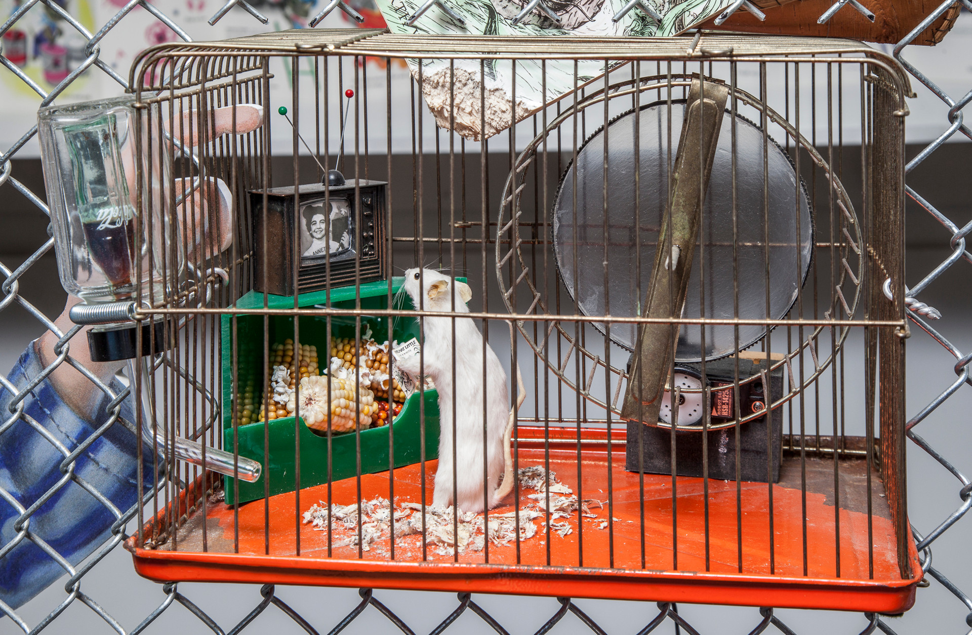 Inside the vintage rodent cage is a taxidermied white mouse. The implied narrative is that the mouse has stepped off his exercise wheel (which is battery operated and continues to turn), abandoned his book (a miniature copy of Stuart Little), and stands totally mesmerized by the image of Annette Funicello (wearing Mouseketeer ears) on his miniature TV set. The food bin below the TV contains his snack food, popcorn, and Coke fills the water receptacle.