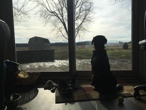 A Dog's Contemplative Wisdom