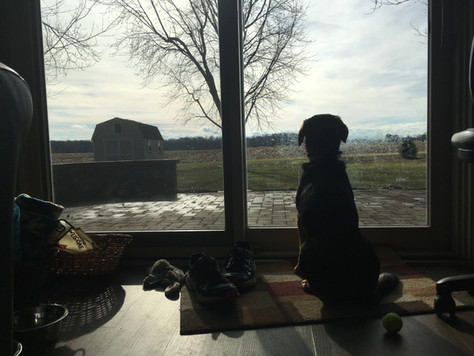 A Dog's Contemplative Wisdom