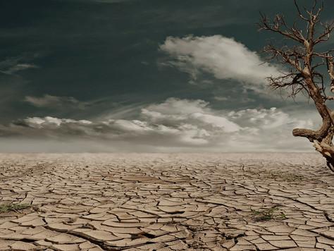 Poem: Desert Madness