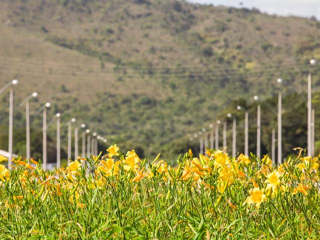 Palmas-Arvoredo-0167.jpg
