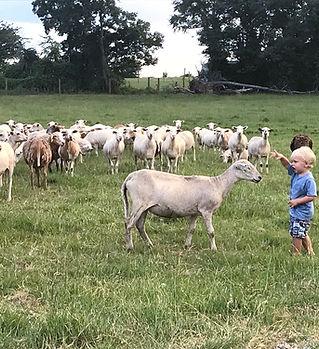 Katahdin Sheep Near Me