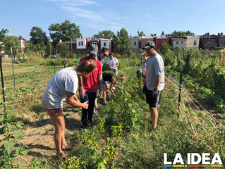 Volunteering at Common Good City Farm