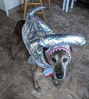 raina shark.jpg