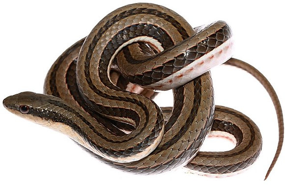 Snake Bucket