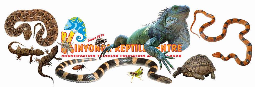 """Résultat de recherche d'images pour """"Hoedspruit snake park"""""""
