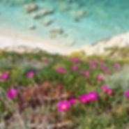Spiaggia e fiori.jpg