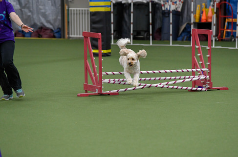Colleen CPE Agility 6 April-5.jpg