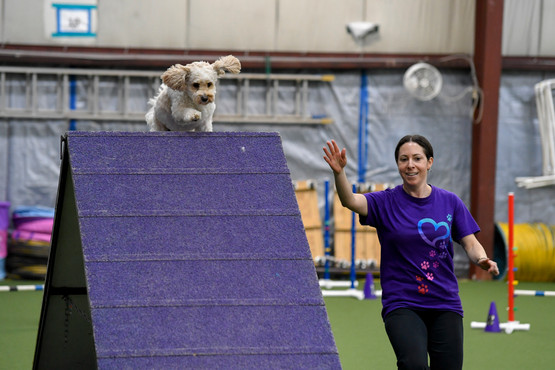 Colleen CPE Agility 6 April-7.jpg