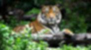 John-Ball-Zoo-1-1080x600.jpg