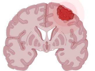 Brains Behind Exercise