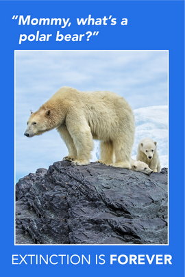 Extinction Series – Polar Bears