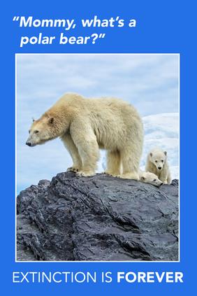 Extinction Series – Polar Bears