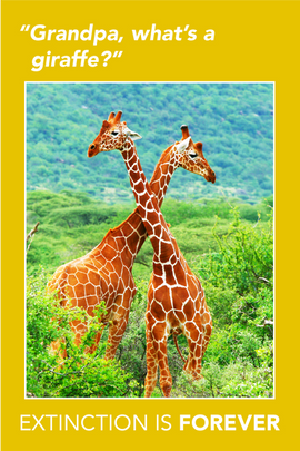 Extinction Series – Giraffes
