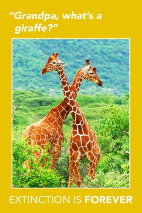 Extinction Series –Giraffes