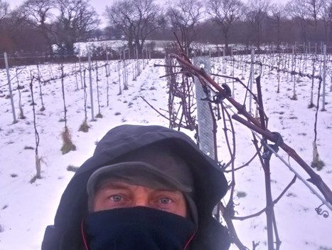 Pruning Ninja Spotted in ...