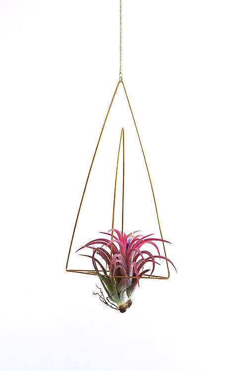 Triangel no.3 + air plant