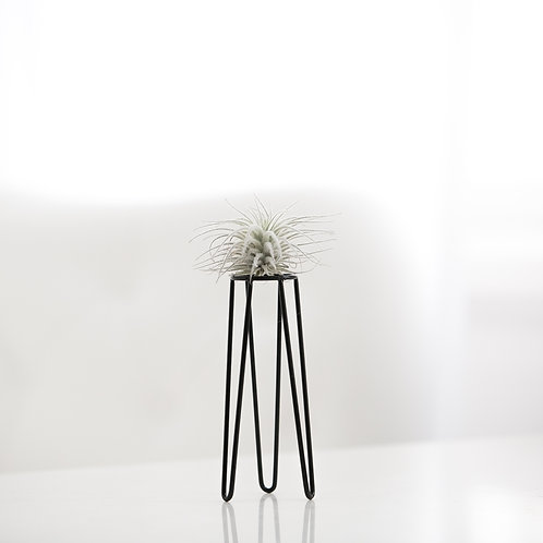 Tower S + air plant