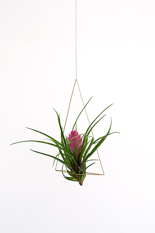 Triangel no. 2 + air plant