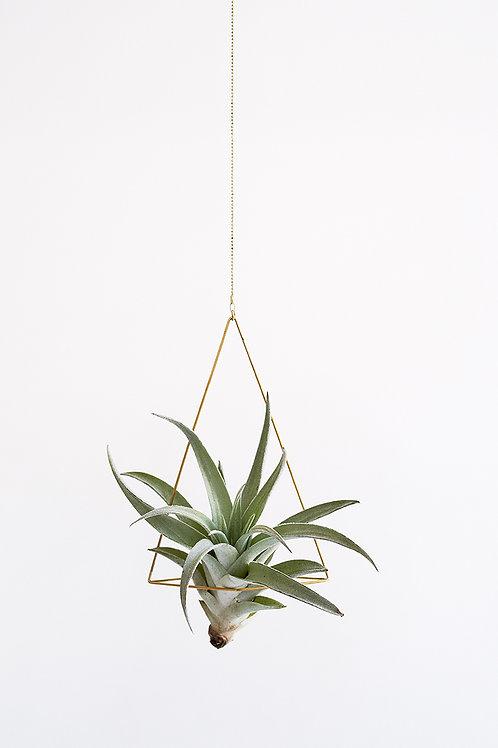 Triangle no.1 + air plant
