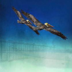 Pelicans in Flight at Scripps Pier