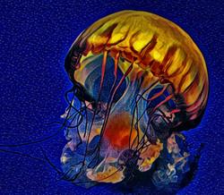 jelly-fish-scripps-a