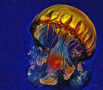 Mushroom Jelly Fish