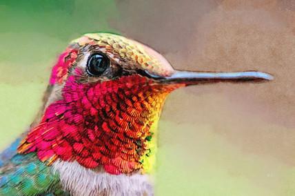 Anna's Iridescent Hummingbird.jpg