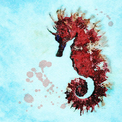Fire Red Seahorse