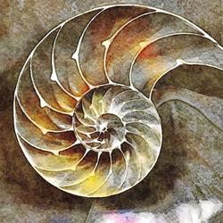 Nautilus Chambers