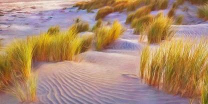 Beachgrass.jpg