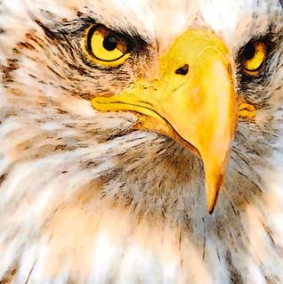 The Eagle's Eye.jpg