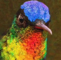 Fiery-Throated Hummingbird.jpg