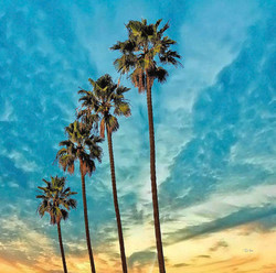 Four Palms at Windansea