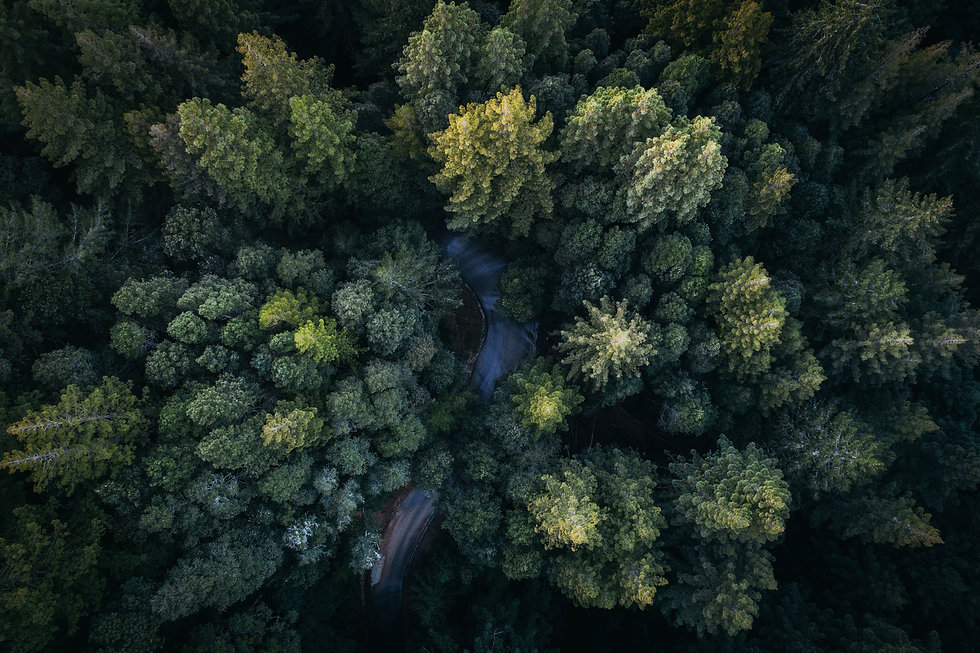 kisscc0-aerial-photography-forest-photog