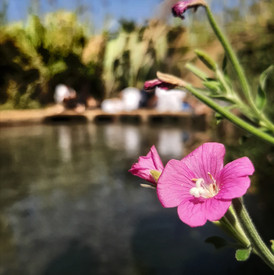 נהר הדן