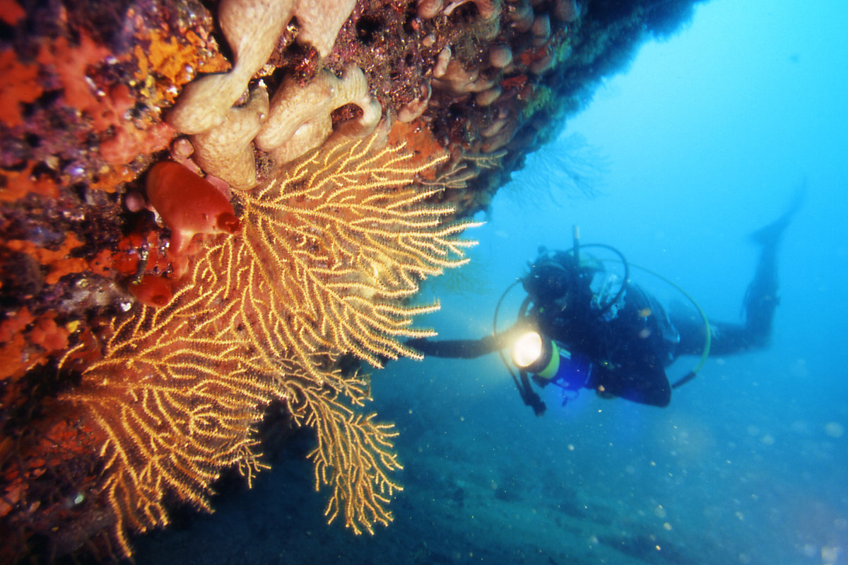 sub e corallo