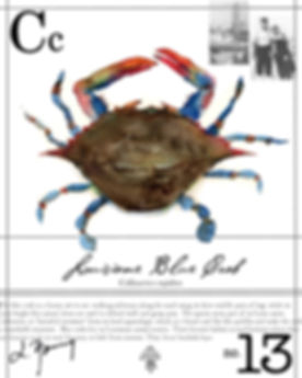 la blue crab.JPG
