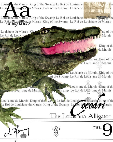 louisiana alligator 5.jpg