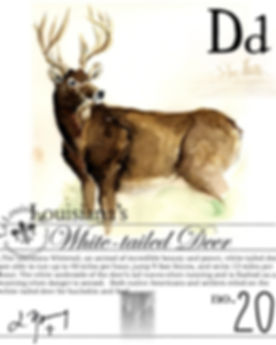 LA white tailed deer.jpg